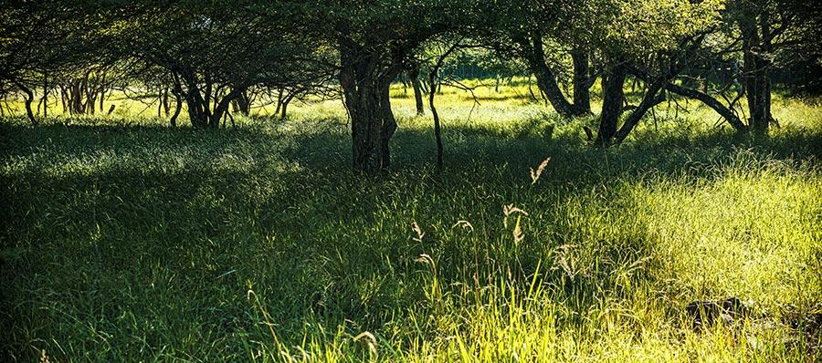 朝の湿原パノラマ写真