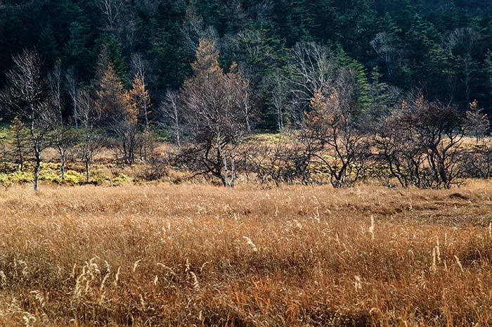 大阿原湿原 11月