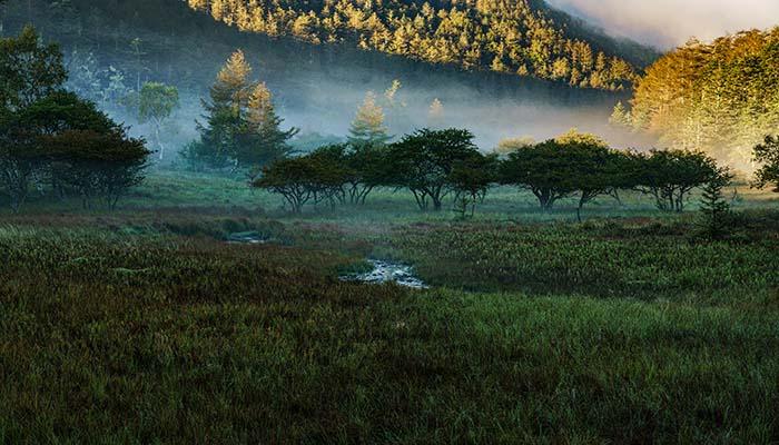 大阿原湿原、朝霧