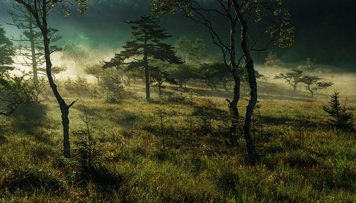 9月 大阿原湿原の朝霧